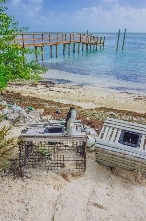 Cajones en la playa por el embarcadero y el mar cerca de Key West, la Florida, los E.E.U.U. imágenes de archivo libres de regalías