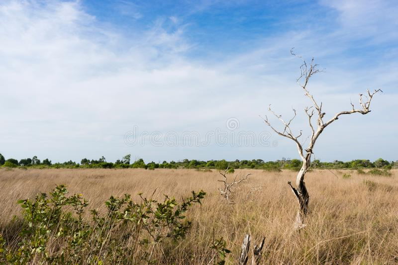 beach forests on dry season at Khao Na Yak, Khao Lampi - Hat Thai Mueang National park, Phang Nga province, Southern Thailand stock image