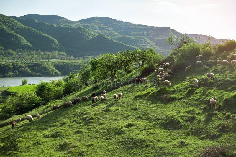 Cakle na wzgórza Albania naturze fotografia royalty free