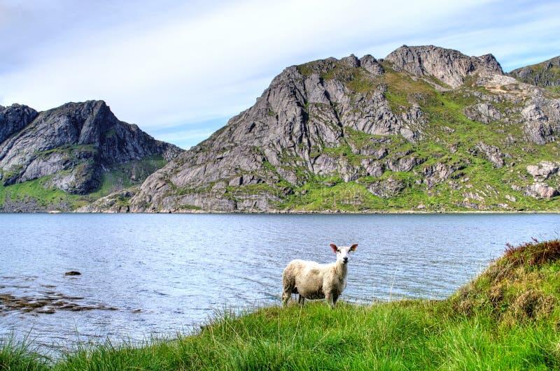 Cakle w górach w Norwegia zdjęcia stock