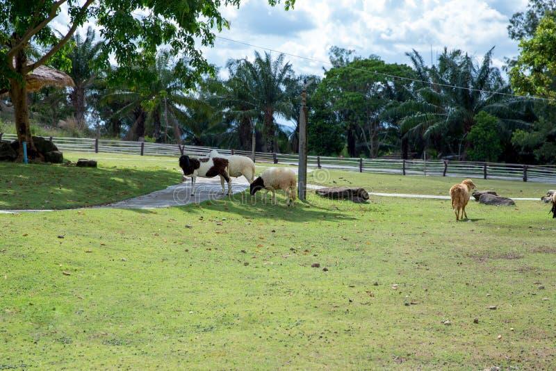 Cakle w Tajlandzkim gospodarstwo rolne domu fotografia stock