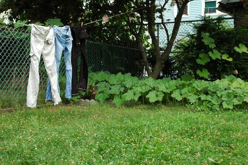 Calças de brim na linha de roupa. foto de stock royalty free