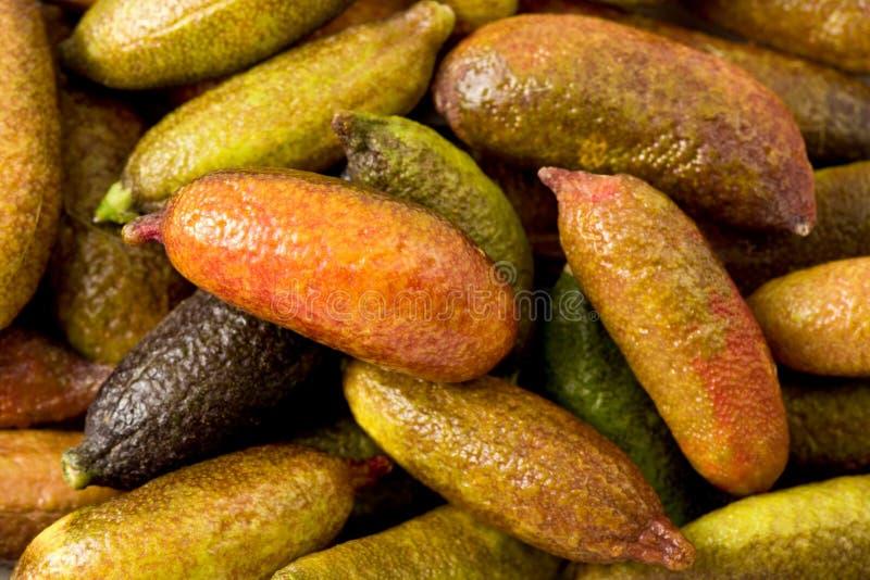 Cal del dedo (australasica de la fruta cítrica) imagenes de archivo