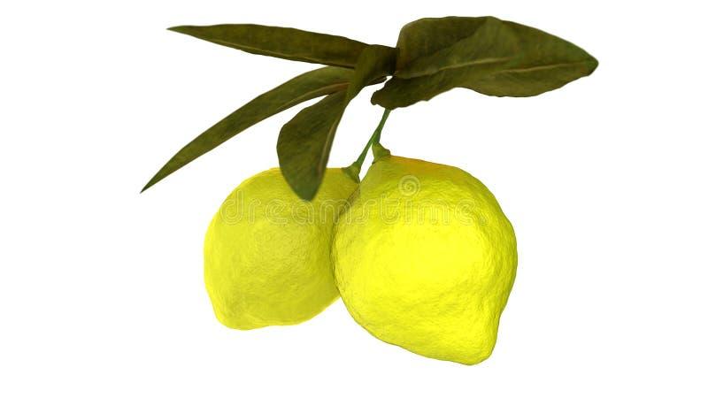 Cal do limão que pendura no ramo de árvore fotos de stock
