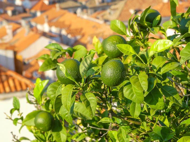 Cal ou close up dos limões com a cidade mediterranian pitoresca fotos de stock