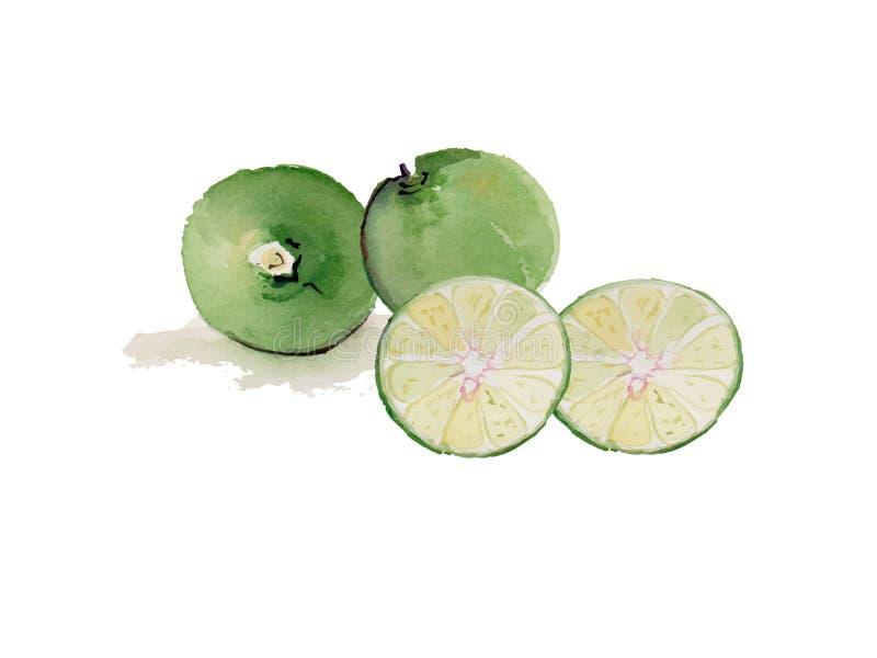 Cal, vetor background1 da ilustração da aquarela do limão ilustração do vetor