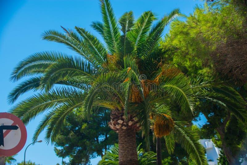 Cala d& x27; Lub Mallorca zdjęcie royalty free