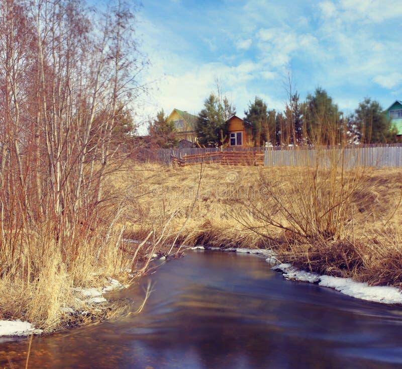 Cala de la primavera imagen de archivo