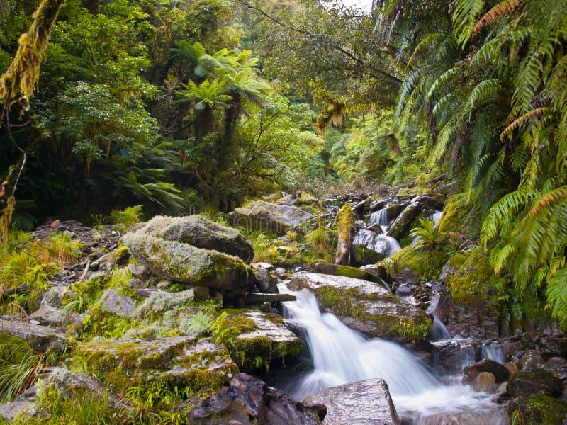 Cala de la selva tropical foto de archivo