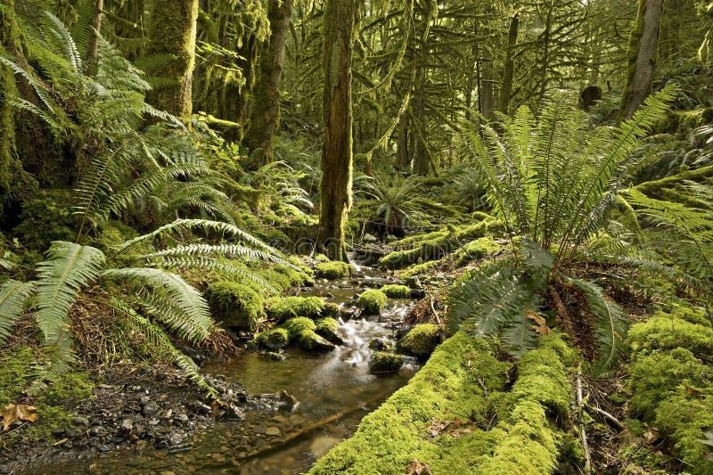 Download Cala de la selva tropical imagen de archivo. Imagen de verde - 7277855