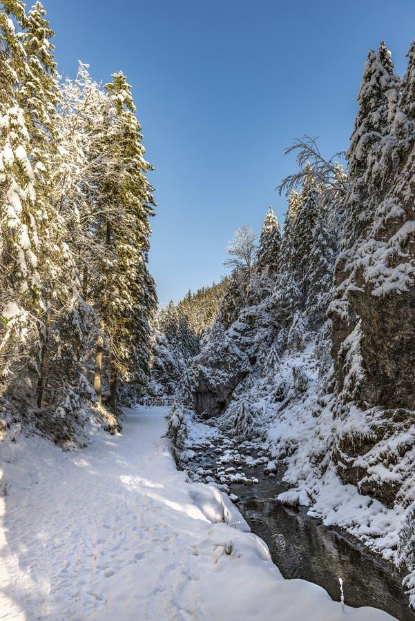 Cala del invierno con el bosque de la nieve en día soleado escarchado foto de archivo libre de regalías