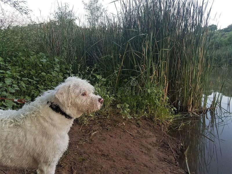 Cala del perro imágenes de archivo libres de regalías