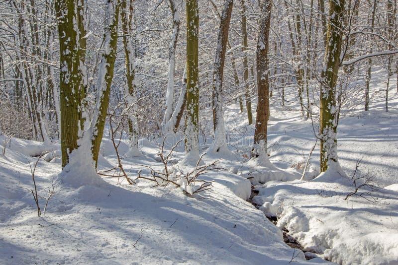 Cala en bosque del invierno en pequeñas colinas cárpatas fotos de archivo libres de regalías