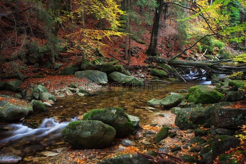 cala en bosque del otoño fotografía de archivo