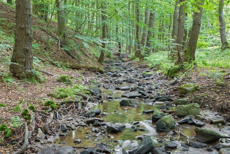 Cala en el bosque de pequeñas colinas cárpatas foto de archivo libre de regalías