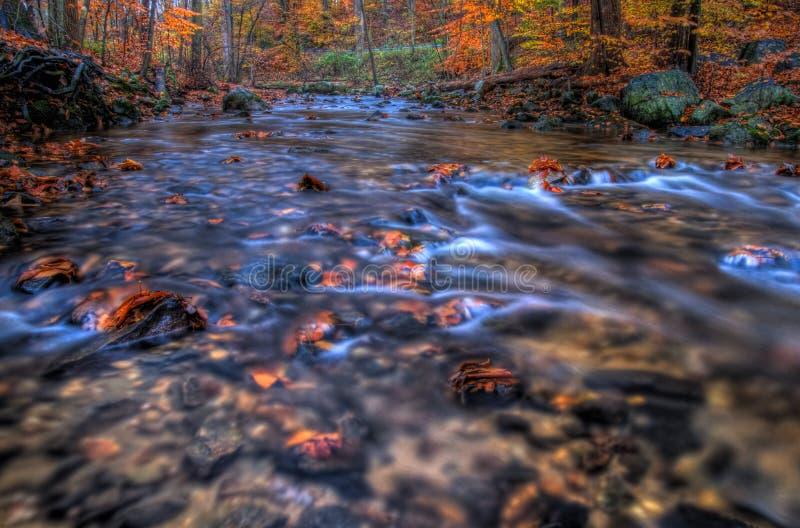 Cala en la estación del otoño foto de archivo libre de regalías