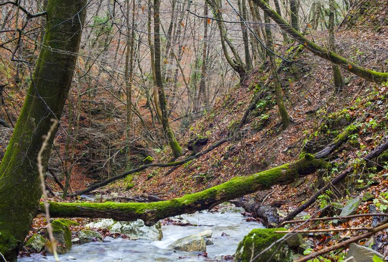 Cala en los árboles forestales enselvados imagen de archivo