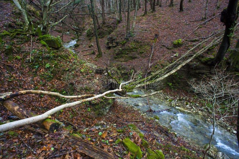 Cala en los árboles forestales enselvados foto de archivo