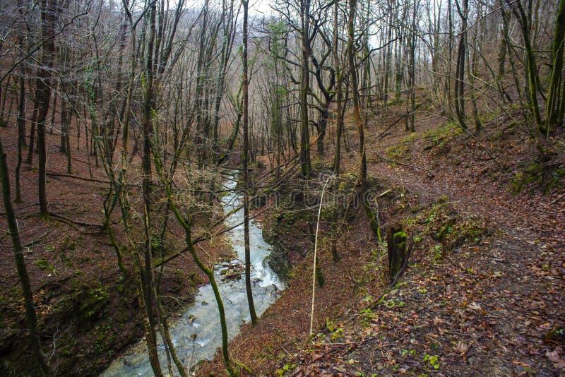 Cala en los árboles forestales enselvados foto de archivo libre de regalías