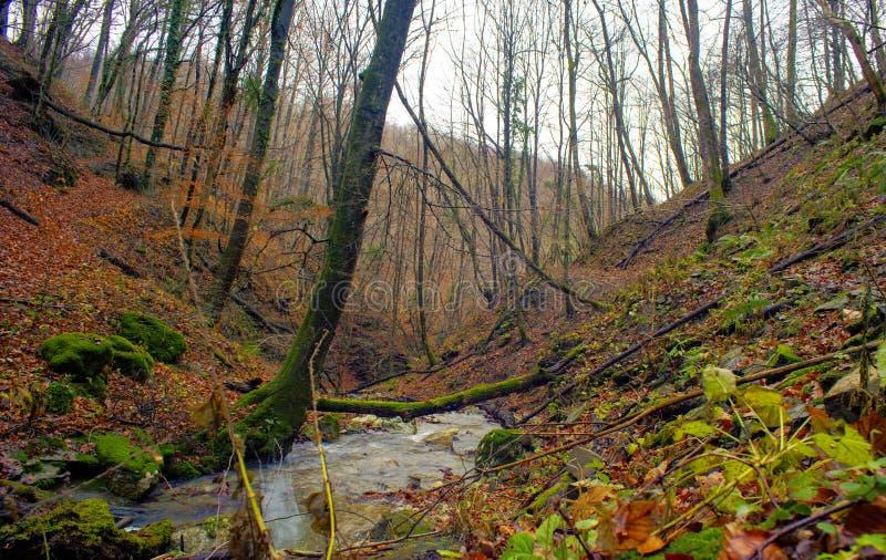 Cala en los árboles forestales enselvados imagenes de archivo