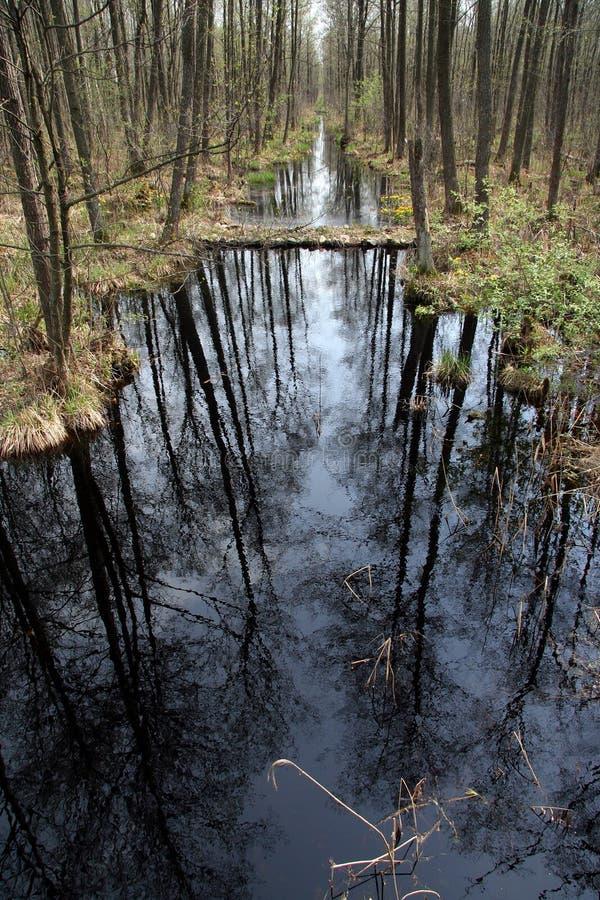 Cala en un bosque fotos de archivo libres de regalías