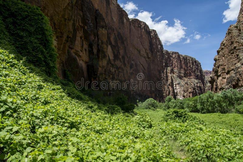 Cala/Grand Canyon de Havasu foto de archivo libre de regalías