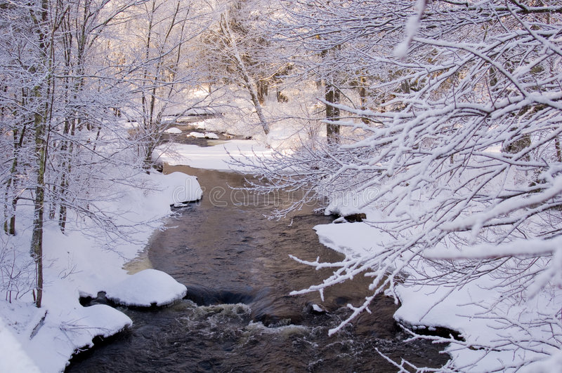 Cala nevada en bosque del pino fotos de archivo libres de regalías