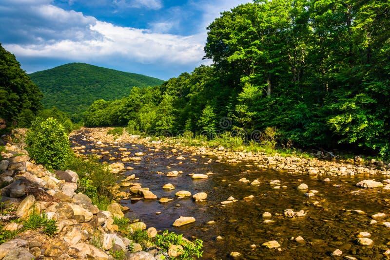 Cala roja, en las montañas rurales de Potomac de Virginia Occidental fotos de archivo