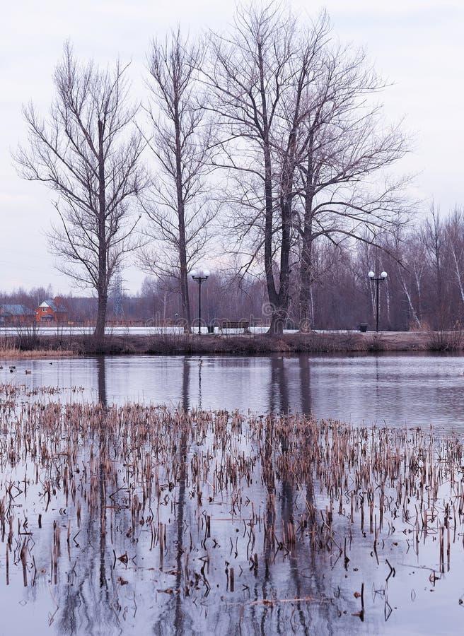 Cala vertical del agua en el fondo del paisaje del parque de la primavera foto de archivo libre de regalías