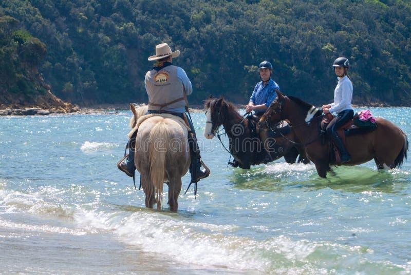 Cala Violina plaża Scarlino, Maremma Tuscany, Włochy Końska jazda przy zmierzchem na plaży obraz royalty free