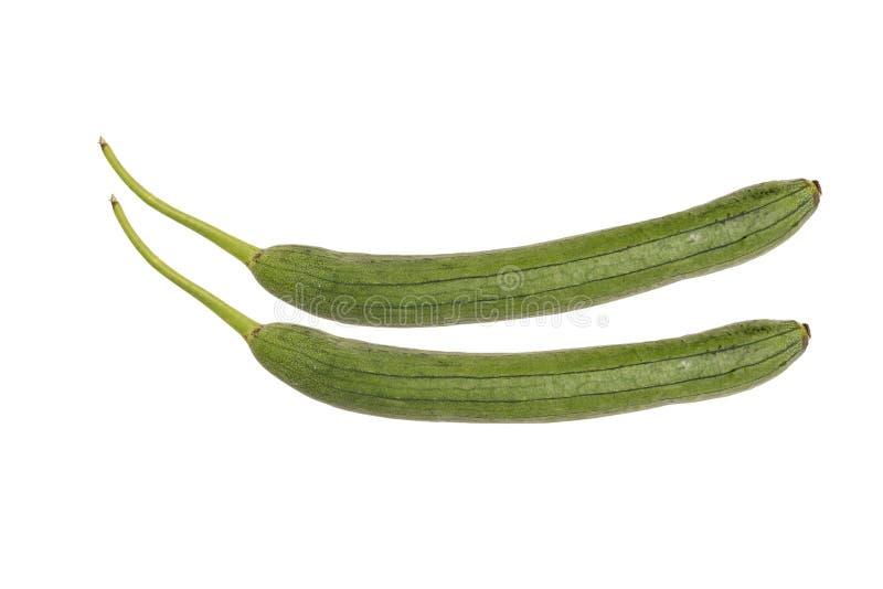Calabac?n verde aislado en el fondo blanco E r r fotografía de archivo
