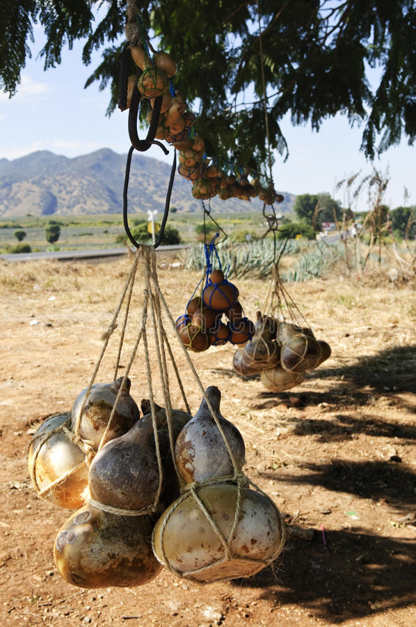 Free Calabash Gourd Bottles In Mexico Royalty Free Stock Images - 13481569