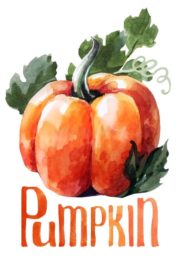 Calabaza anaranjada Acuarela del dibujo de la mano en el fondo blanco con título libre illustration