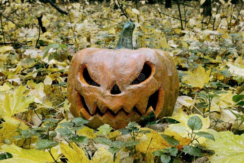 Calabaza asustadiza para Halloween en el bosque del otoño fotografía de archivo