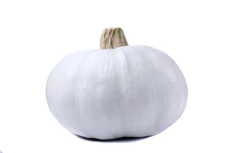 Calabaza blanca aislada del albino imágenes de archivo libres de regalías
