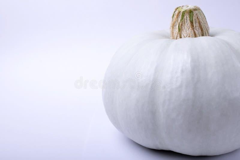 Calabaza blanca del albino imagen de archivo
