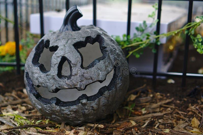 Calabaza de Grey Halloween en la tierra fotos de archivo