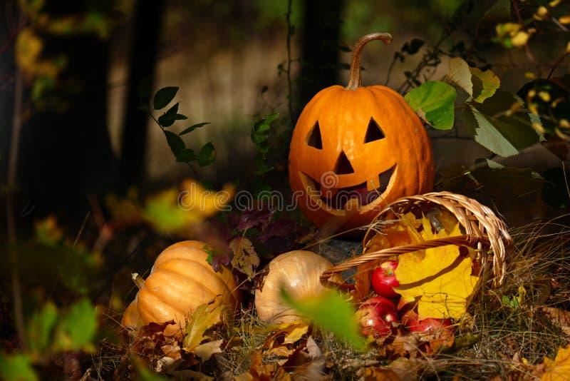 Calabaza de Halloween en el bosque imágenes de archivo libres de regalías