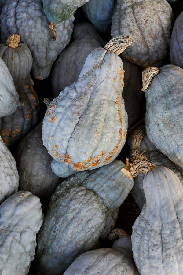 Calabaza de Hubbard azul