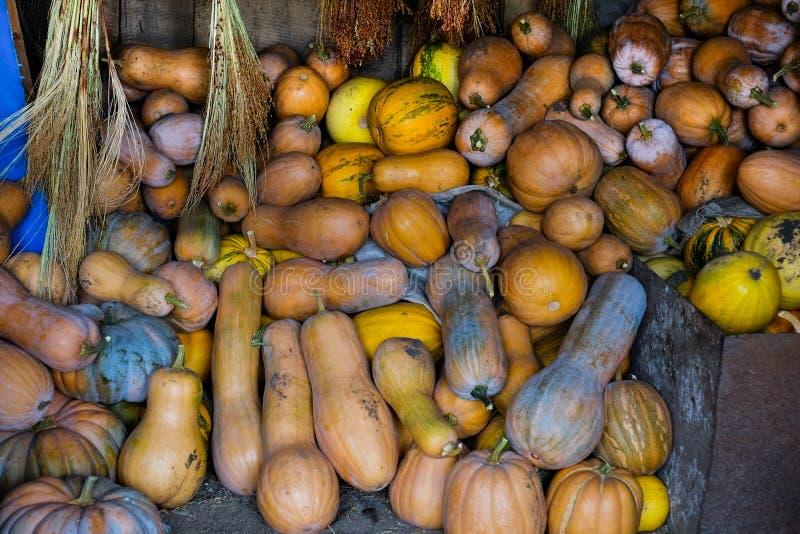 Calabaza de la agricultura fotos de archivo libres de regalías