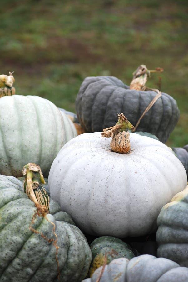 Calabaza de la herencia - producción del soporte de la granja del otoño fotos de archivo