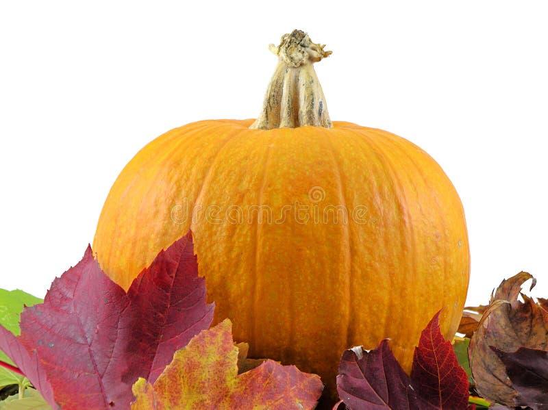 Calabaza de otoño imagenes de archivo