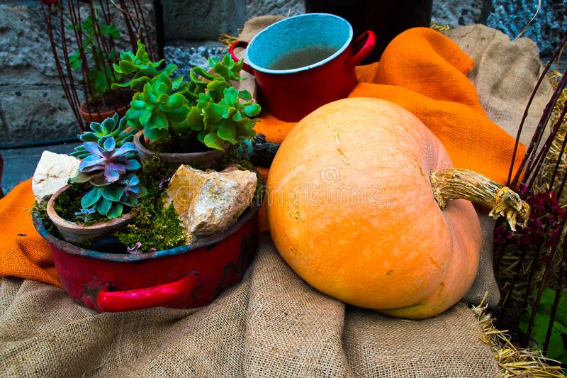 Calabaza de otoño de cosecha propia en un jardín de la familia con los potes fotografía de archivo libre de regalías
