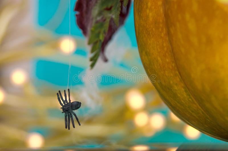 Calabaza de Víspera de Todos los Santos con la araña fotos de archivo libres de regalías