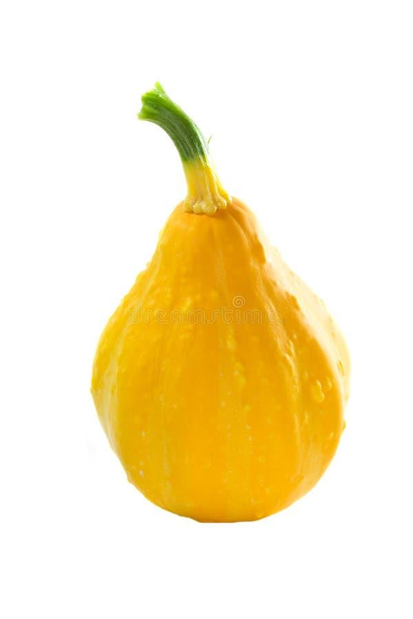 Calabaza de verano del limón. fotos de archivo