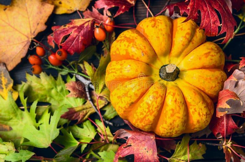 Calabaza en las hojas de otoño coloridas con los escaramujos, visión superior fotos de archivo libres de regalías