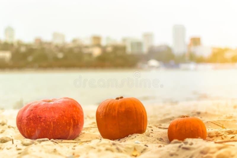 Calabaza en naturaleza festival Halloween de la cosecha del día de fiesta del otoño Día de los muertos Hallowmas fotografía de archivo