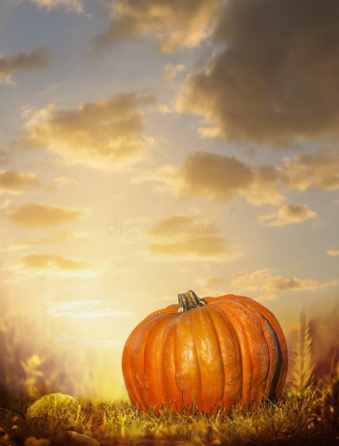 Calabaza grande en césped del otoño sobre fondo del cielo de la puesta del sol imágenes de archivo libres de regalías