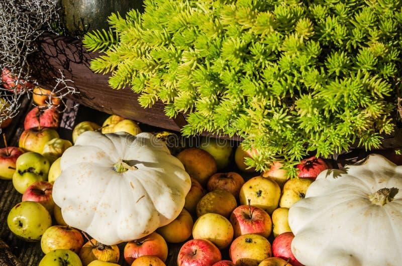 Calabaza, manzanas y calabazas, aún vida fotos de archivo libres de regalías