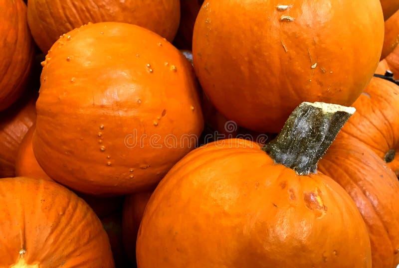 CALABAZA, naranja, cosecha de la caída, acción de gracias, tamaño pequeño, decoración de la tabla imágenes de archivo libres de regalías